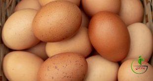 همه آن چیزهایی که باید در مورد تخم مرغ بدانیم